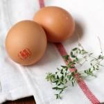 Paradicsomszószban sült tojás, azaz shakshuka