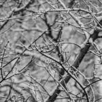 Szuper reggeli: Vegán cukormentes kókuszos dió-mandula-kesudió kása hideg téli reggelekre
