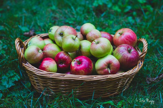 Almás diós kuglóf (laktózmentes, vegán)