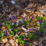 Tavaszi karitatív kampány a BWT-vel – Föld világnapja
